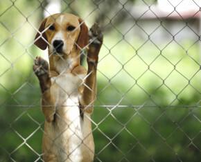 Dierenasiel hond