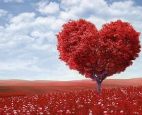 liefdesbomen