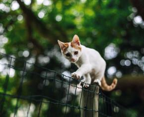 kat op hek